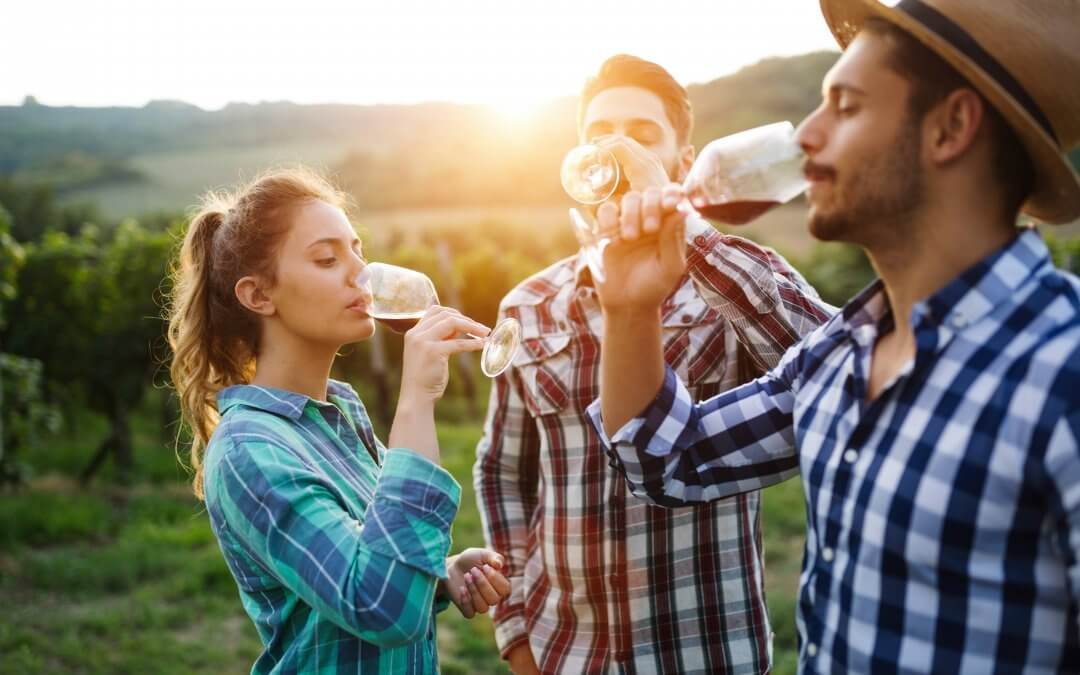 Wine and Brewery Tours Terms